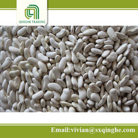 different types dried beans, flat white kidney beans