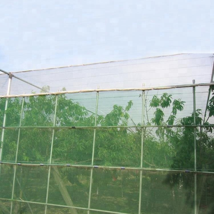 EGP plant protection plastic anti Hail/Insect <strong>net</strong> anti insect <strong>net</strong> for crop