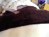 /product-detail/factory-wholesale-sheep-and-goat-skin-price-sale-goat-skin-60471321258.html