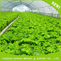 New Type Top Sale Agricultural Greenhouse