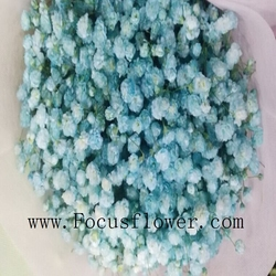 New fair for weddings multi color baby's breath fresh collected flowers gypsophila Flower bouquet for bride from China