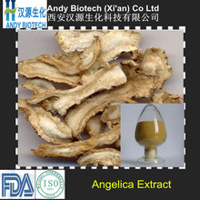High Standard 10:1 angelica dong quai extract