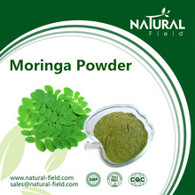 moringa oleifera leaf Great stock with competitive price