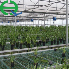 The Cheapest Hot Sale Agricultural/Commercial Plastic film Greenhouse