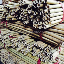 24~26MM 240CM Tonkin Bamboo Stakes For Orchard