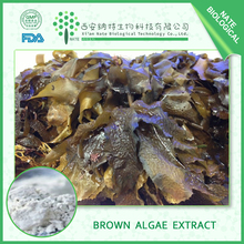GMP Factory Supply Brown Algae/ Kombu Seaweed Extract Powder Fucoxanthin 20% by HPLC