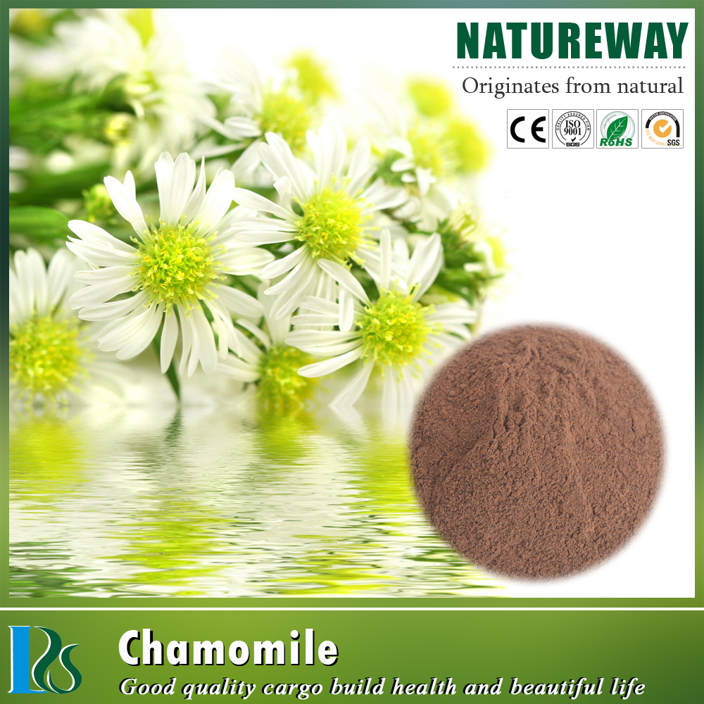 100% natural free sample Roman chamomile extract powder 4:1,5:1,10:1,20:1