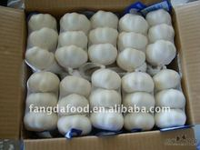 fresh garlic products from china