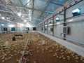Modern Designs Steel Poultry Farm House Chicken Cage