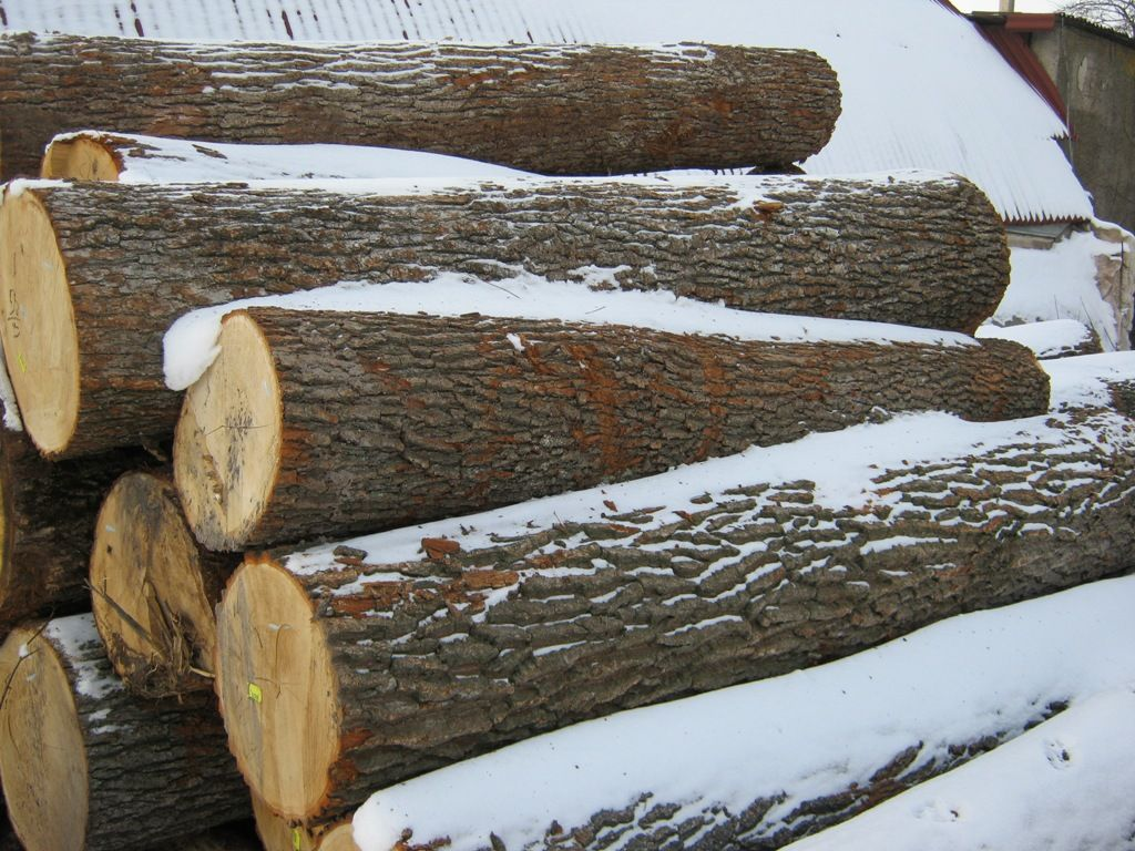 white OAK Logs, best quality and cheap price!