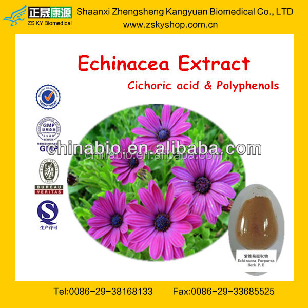 Factory Offer for Echinacea Purpurea Extract