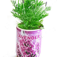 2016 Hot Products In One Euro Shop Basil Growing Kit Flower In Tin Can ,Canned Herb Plant