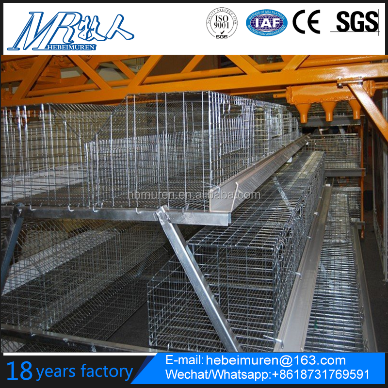 broiler chicken cage and layer chicken cage supplier
