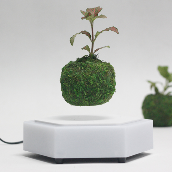 Creative gift bonsai air from China