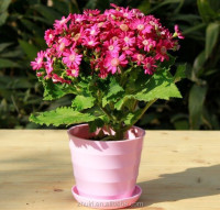 30% melamine colorful different size flower pots wholesale