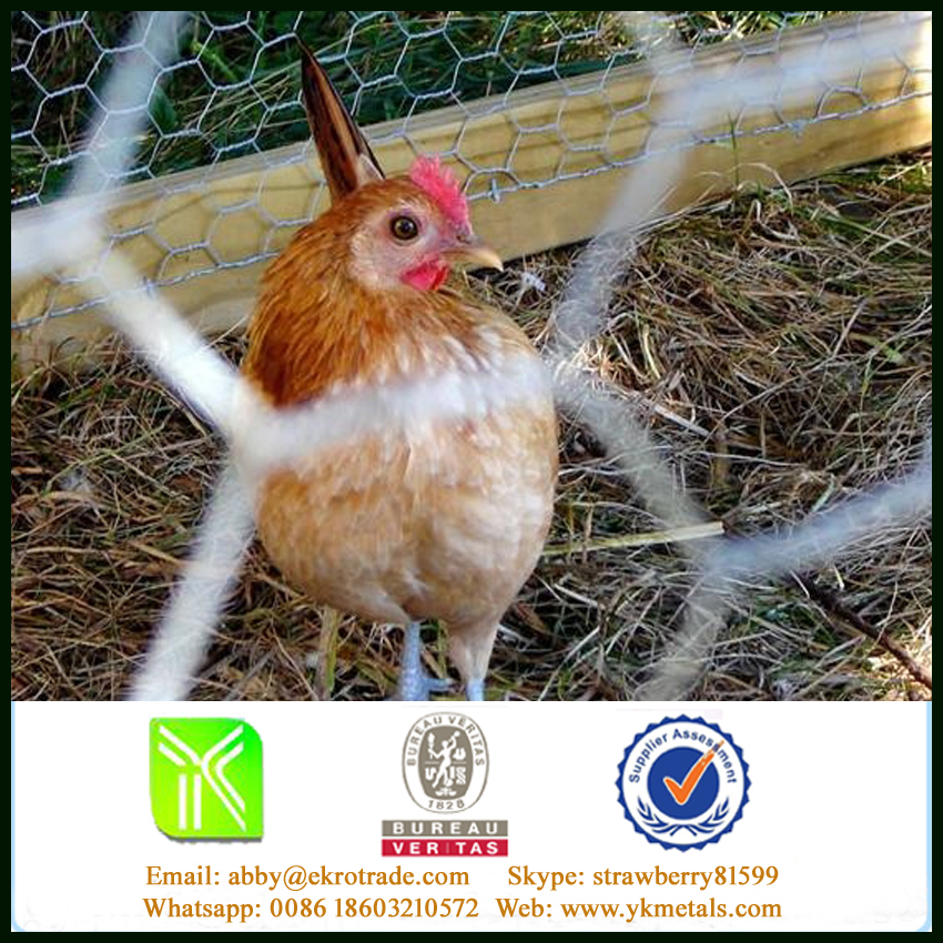 2.1mm/50mm/2 Strands Galvanized Chicken Wire Mesh For Animal Cages