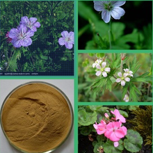 High quality geranium extract dmaa powder/HERBA GERANII