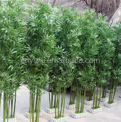 Bambu planta exterior fargesia fungosa bamb semillas - Bambu planta exterior ...