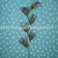 Peacock Feather Craft