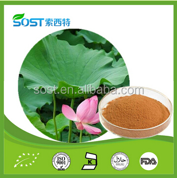 Weight loss product natural plant extraction lotus leaf nuciferine extract