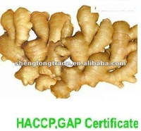supply fresh ginger and air dried ginger