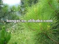 100% nature and pure pine needle extract