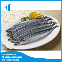 Whole round Frozen Pacific Saury for fish bait No#3