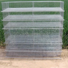 Layer Quail Cages of High-Quality in Farm