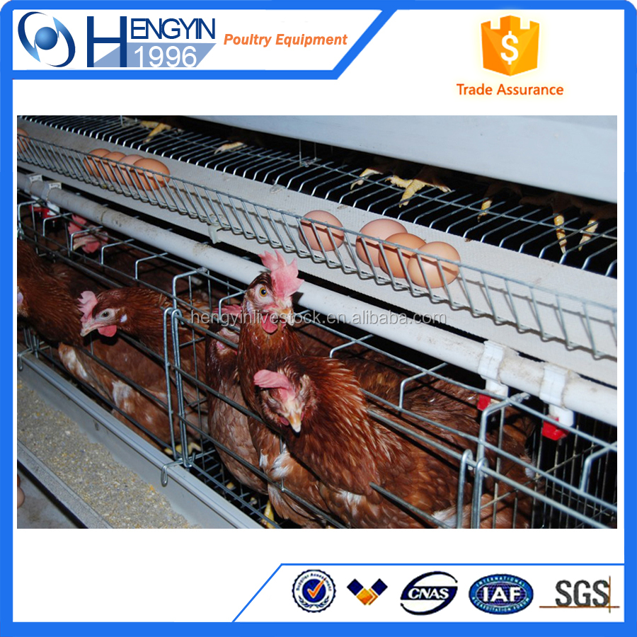 Automatic A-Type Multi-tier Chicken layer cage with new design