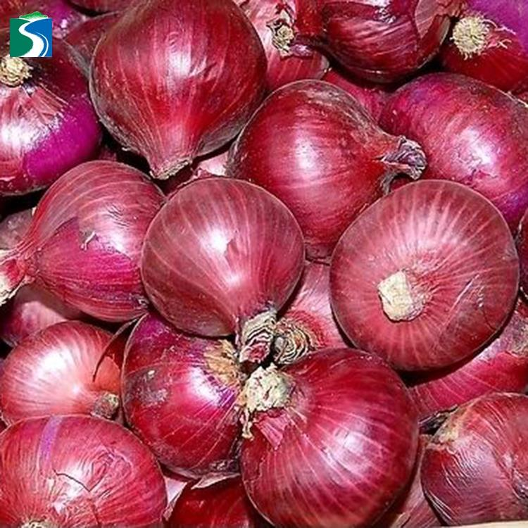 Chinese factory various types high quality lowest price fresh nasik onion sale with fast delivery