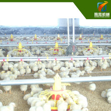Modern chicken use automatic poultry farm equipment for sale