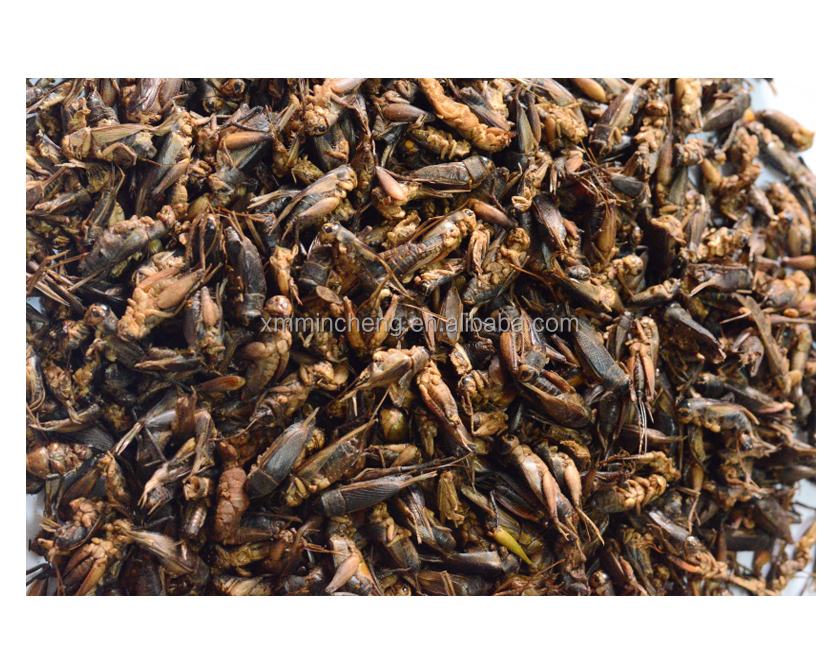Freeze Dried Cricket