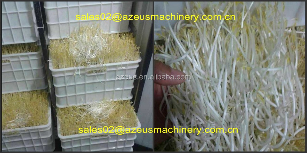 Hydroponic animal feed growing machine for feeding cattle,goats,rabbits