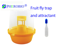 Fruit fly trap and liquid attractant (plant essence)