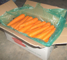 2017 new crops fresh carrot
