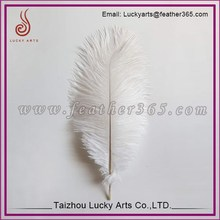 Ostrich Feather Material and Bleached Pattern Ostrich Feather