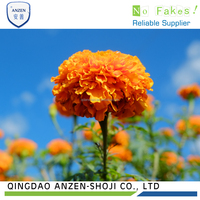 Natural Pigment Lutein Marigold Extract