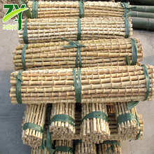 ZY401 Good Quality Natural Bamboo Root Canes Factory Wholesales Prices