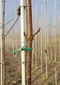 Multipurpose hot sell nursery stake