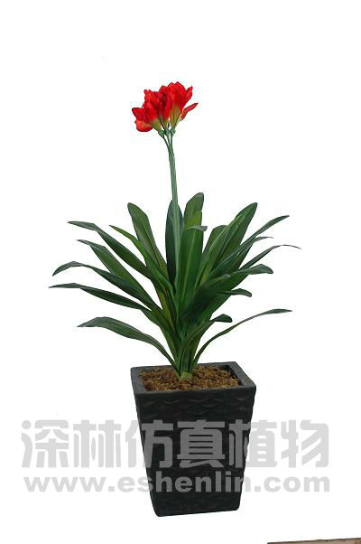 High Quality Thailand Natural Fresh Cattleya Orchid Plant