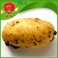 New crop farm fresh yellow potatoes for export