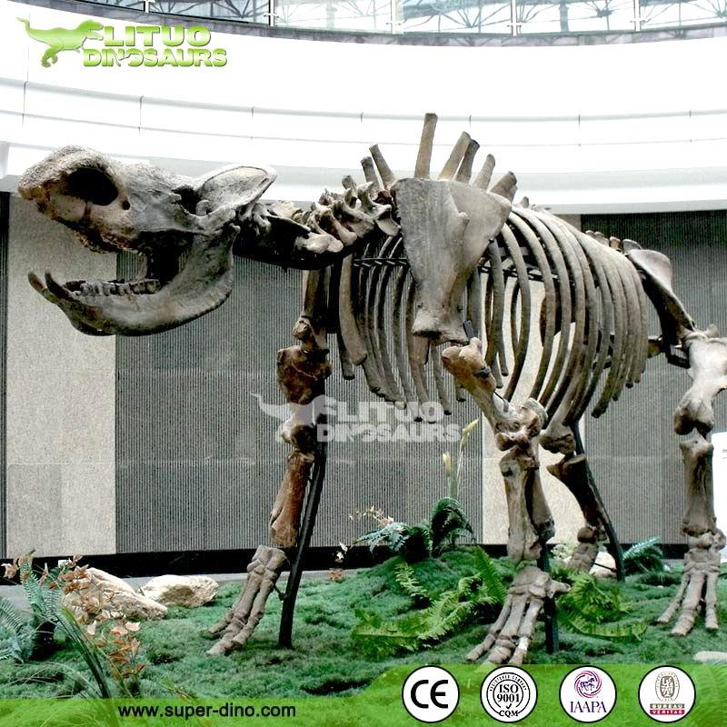 Life Size FRP Animal Skeleton Replica