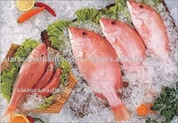 Frozen Red Mullet Sea Fish