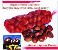 Chinese fresh chestnuts, sweet and easy peeling, size: 30/40