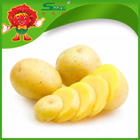 Best price for Chinese large potato