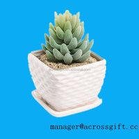 Decorative indoor flower pots White Ceramic Succulent Planter with Drainage Plate