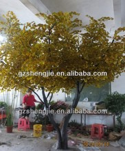 ginkgo biloba trees for sale,maidenhair tree