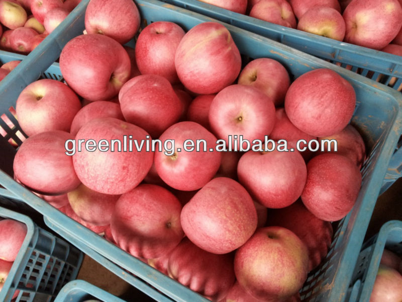 Chinese fresh cheap apple fruit for sale