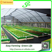 Hot sale single-span small size hydroponic plastic greenhouse for vegetable