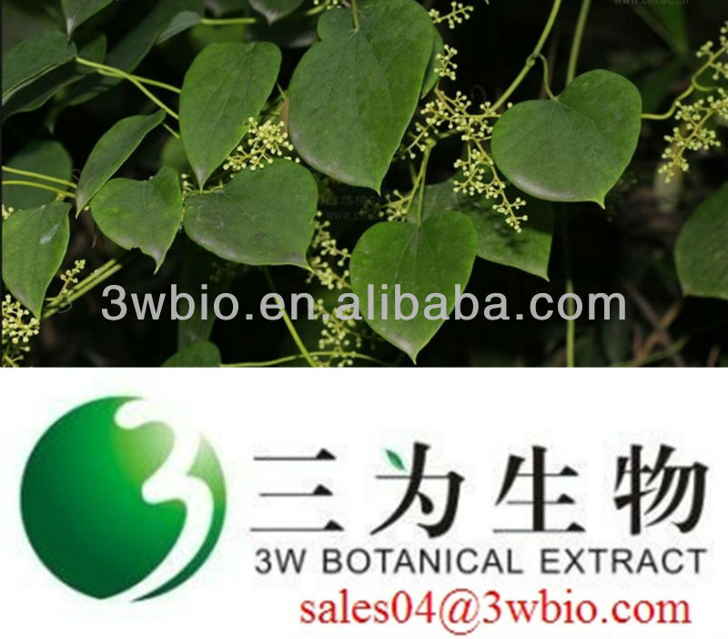 100% natural Sinomenium Acutum Extract/ 98% Sinomenine